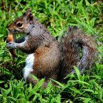 リスの餌はどんぐりと野菜とその他は?